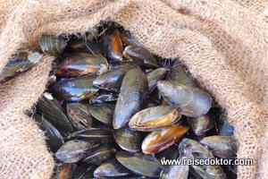 Fischmarkt in Nizza