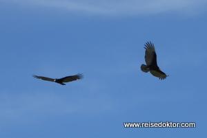 Vögel in Celestún