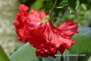 Blumen auf Kuba