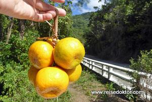 Mandarinen auf Kuba