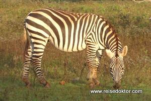 Safari auf der Insel Cayo Saetia