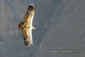 Anden Condor Peru
