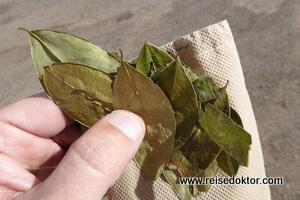 Coca Blätter in Peru