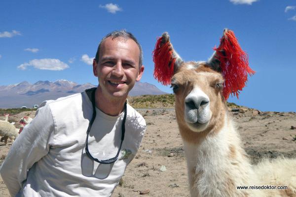 Treffen mit einem Lama in Peru