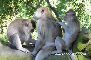 Affen auf Bali