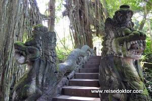 Affenwald Bali
