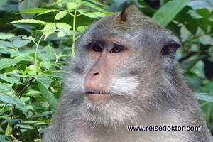 Bali: Ubud Monkey Forest