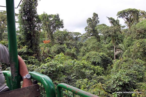 Regenwald Seilbahn