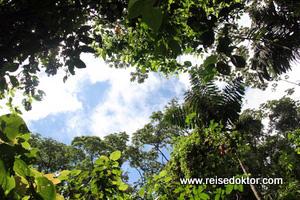 Regenwald Wanderung