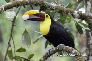 Costa Rica: Vogelbeobachtung am frühen Morgen