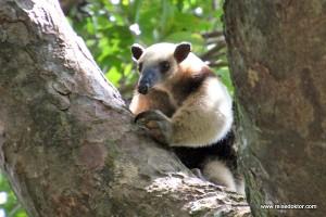 Costa Rica: Nationalpark Rincón de la Vieja