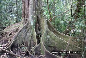 Bäume Costa Rica