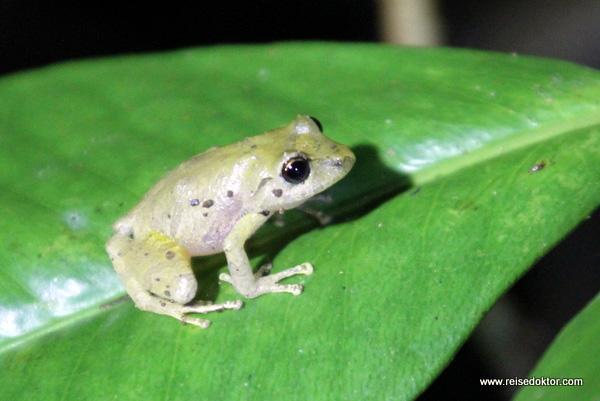 Frosch bei Nacht