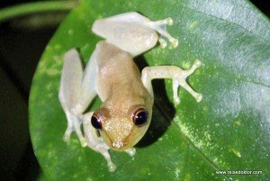 Costa Rica: Nachtspaziergang bei der Nicuesa Lodge