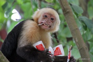 Costa Rica: Kurzbesuch in Montezuma