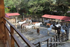 Stall Hacienda Guachipelin
