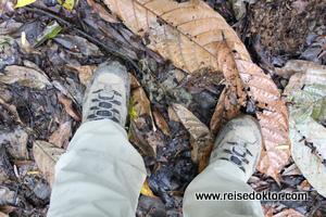 Wandern Regenwald
