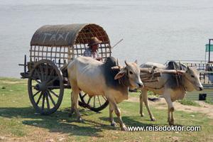 Ochsentaxi Myanmar
