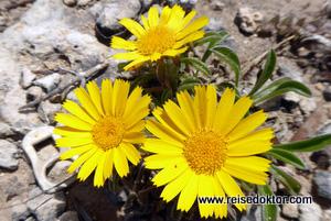 Blumen auf Menorca