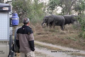 Campingplatz Elefanten