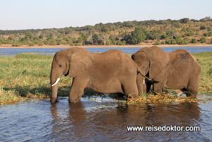 Chobe Bootsfahrt Elefanten