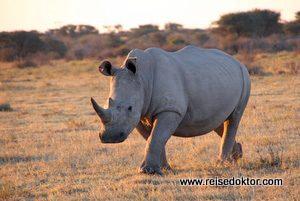 Nashorn Botswana