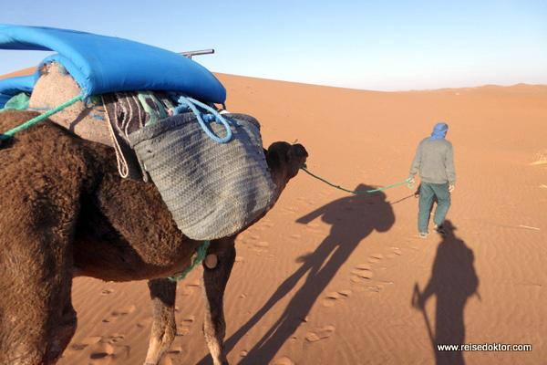 Tromedar Marokko Wüste