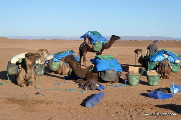 Dromedare Wüstenwanderung