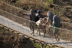 Esel über Hängebrücke