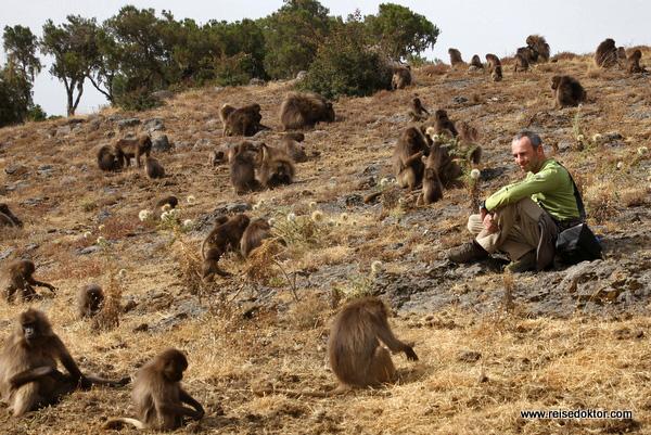 Blutbrustpaviane Äthiopien