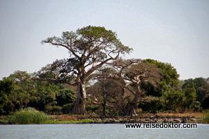 Tana See Ufer
