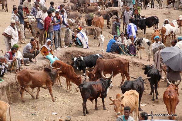 Viehmarkt in Lalibela