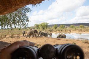 Elefantenbeobachtung